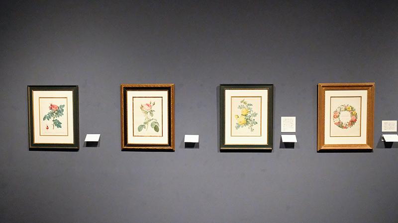 特別展「宮廷画家ルドゥーテとバラの物語」 八王子市夢美術館 OBIKAKE 展覧会レポート