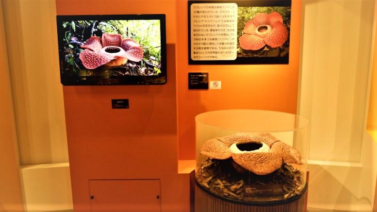 国立科学博物館「植物 地球を支える仲間たち」/展覧会レポート/チケットプレゼント